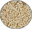 Circle Safflower seed