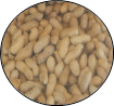 circle peanuts in shell