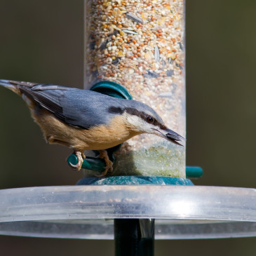 What's in Your Feeder?