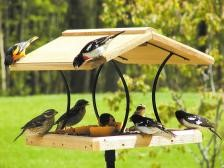 Fly Through Feeder