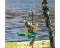 porch swing squirrel