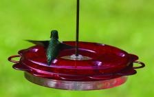 Birds Choice 12 oz. Hummerfest Feeder